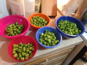 Hops to add
